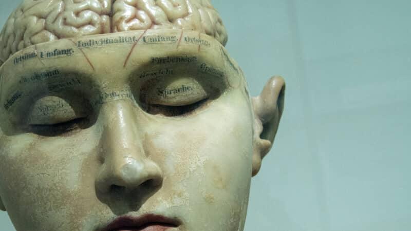 libros neurociencia y educacion