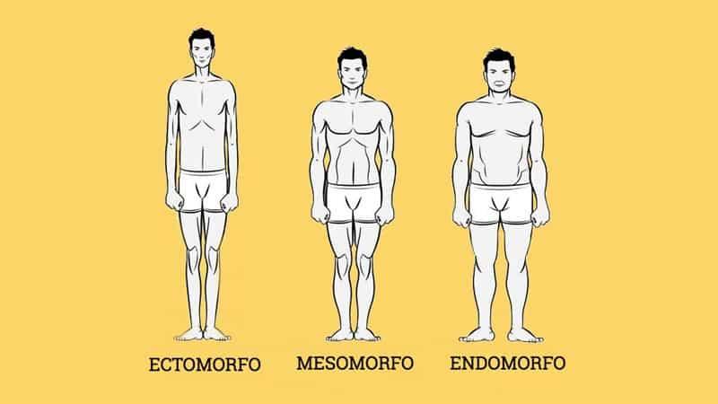 tipos de cuerpos